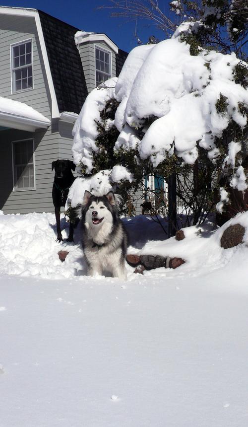Snowpuppies
