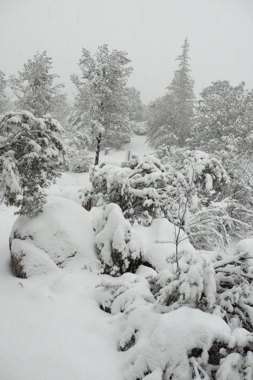Snowfalling1