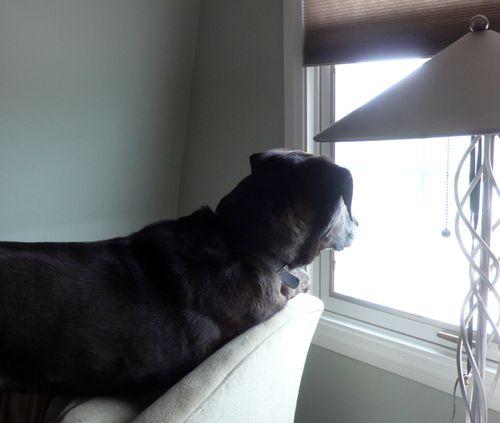 Henry_watching