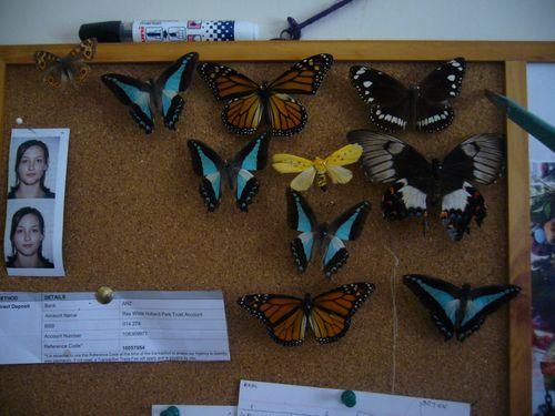 Ss3_butterflies